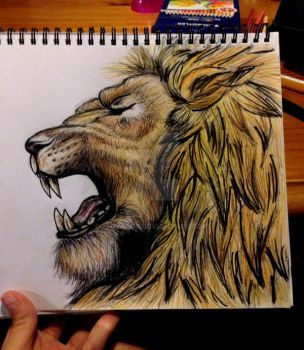 Lion by shan1506