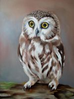 Saw Whet Owl by TernFeather