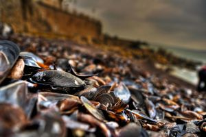 Mussels HDR by MihaiDaniel
