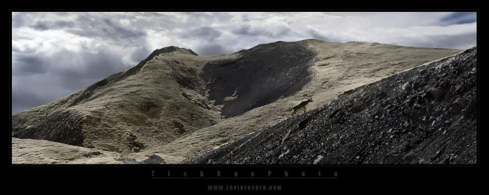 The way of the caribou II by tisbone