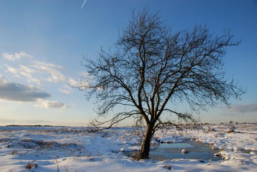 Winter Composition 6 by Balduinus