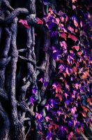 Vines and Leaves of Violet Blu by pendragon93