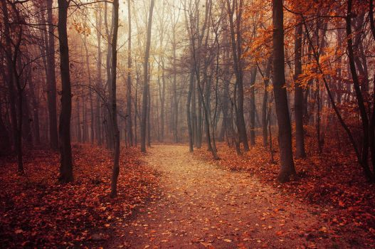 Autumn Walk LXX. by realityDream
