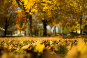 Fall Leaves by r54656