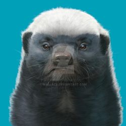 Honey Badger by wallace
