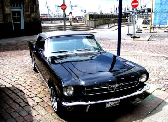 Mustang, baby by ZeARcH