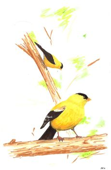 goldfinch marker-sketch by comic-burn