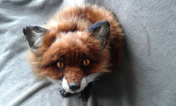 fox by funanyadolls