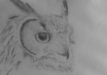 A third owl drawing by Sabs546