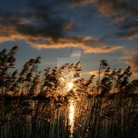 Sunset by a lake by Comane