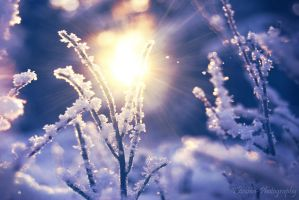 Snow by Floreina-Photography