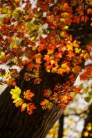 Fall Colors by BlackRoomPhoto