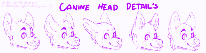 Canine head details tricks sheet by P4LE