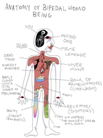 Anatomy of Bipedal Homo Being by Grandiose-Delusions