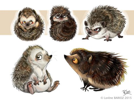 Hedgehogs Study by Dragibuz