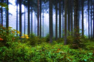 Morning Jungle by MarcoHeisler