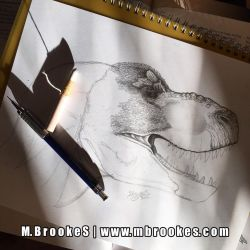 Tyrannosaurus rex Study by she1badelf