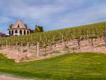 Winery. by iheartcaptainkirk