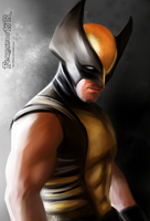 WOLVERINE  (fan art) by killbiro