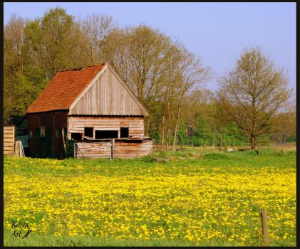 Old shed new Spring by Buble