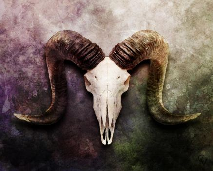 Goat Skull by crimsonvermillion