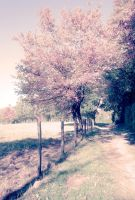 sweet nature by piink-chamallow