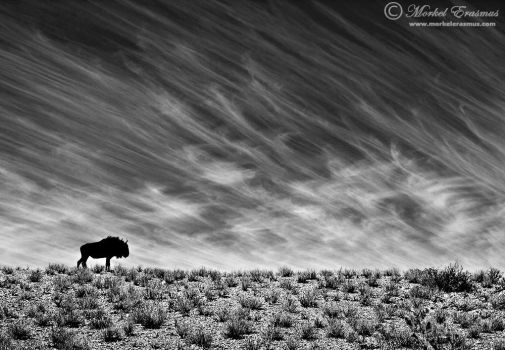 Desert Survivor by MorkelErasmus