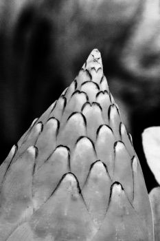 Bud Scales by Daemare