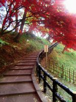 Cherry Blossom Stairway by MegsPinkMartini