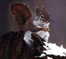 Red Squirrel by phan-tom