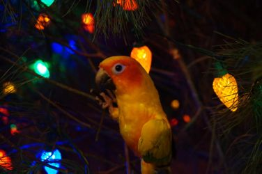 Conure and the Lights by shinigamisgem