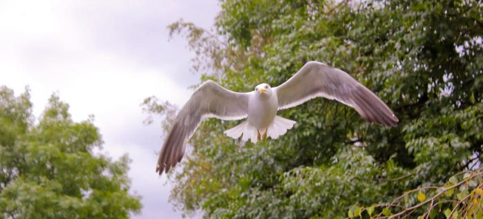 Gull 002 by BusterBrownBB