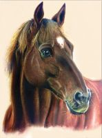 Horse portrait by thefrenchberet