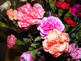 Colorful Carnations 002 by BlueIvyViolet