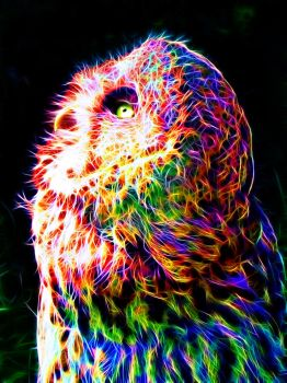 Colorful Owl by megaossa