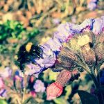 A Humble Bumble by Camerastry
