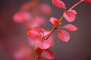 Day 6 of 365 - Cardinally beautiful by AmyKPhotos