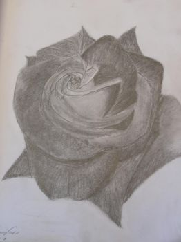 Just Another Rose Drawing by linkpower22