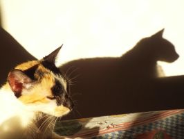 Cat and her shadow by argemirogarcia