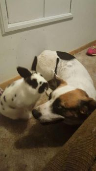 bunny and dog buds :) by CowgirlUpAndGetDown