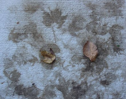 Impressions of Autumn by docbert