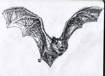 line-based bat by onlyWitness