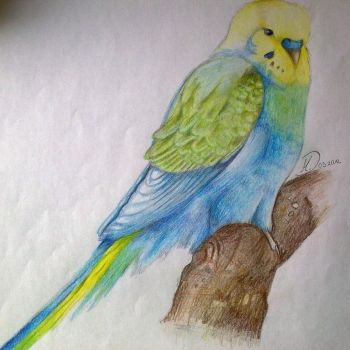 Budgie by Balticdragon