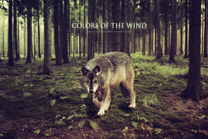 GIFT: COLORS OF THE WIND by Shiki-Jinrou