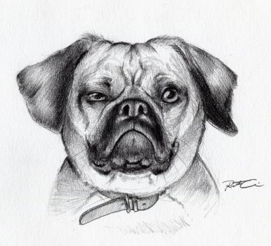 Pugalier by RobtheDoodler