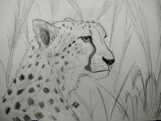 Cheetah practice - one more by kosko99