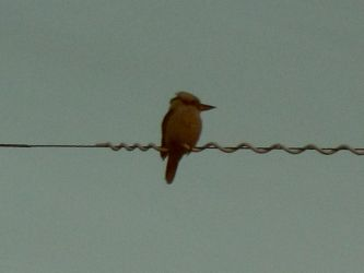 Bird On A Wire. by verdenpark
