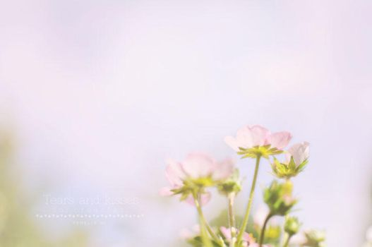 Summer.. please stay by Tirileh