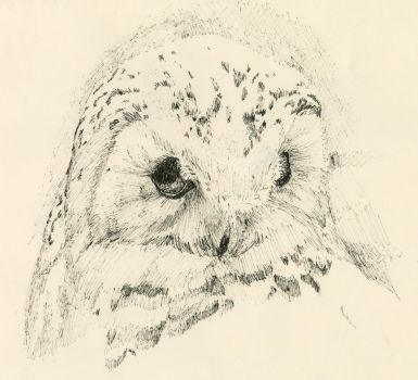 Owl Study by AthensTheGreat