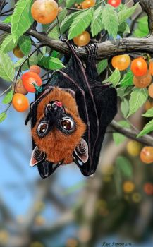 A Flying Fox Thanksgiving by Psithyrus